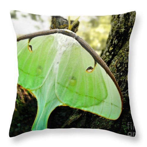 Macro Throw Pillow featuring the photograph Luna Moth No. 3 by Todd Blanchard
