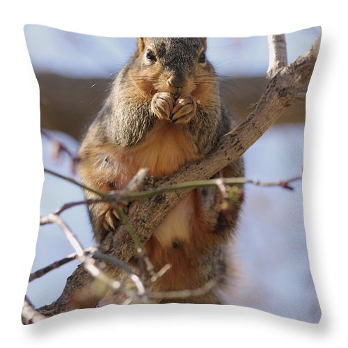 Squirrel Throw Pillow featuring the photograph Lunch by Lori Tordsen