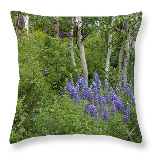 Aspen Throw Pillow featuring the photograph Lupine And Aspens by Heather Coen