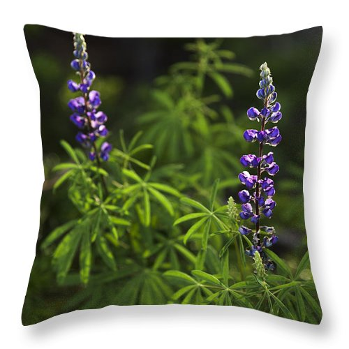 Lupine Throw Pillow featuring the photograph Lupine by Chad Dutson