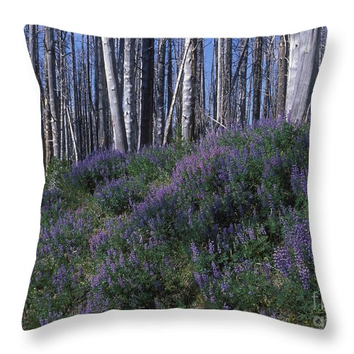 Yellowstone National Park Throw Pillow featuring the photograph Lupine On Mt. Washburn - Yellowstone by Sandra Bronstein