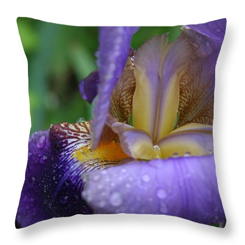 Iris Throw Pillow featuring the photograph Luscious Blooming Iris by Mary Gaines