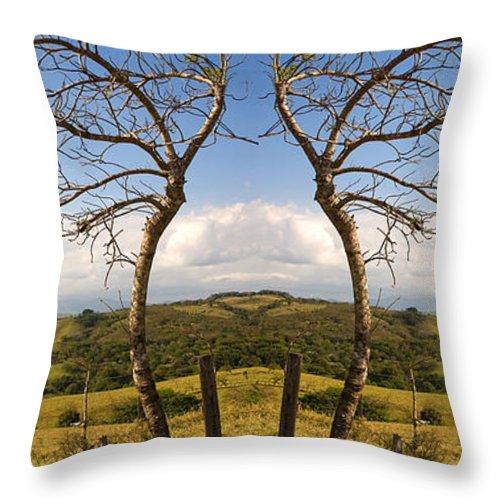 Trees Throw Pillow featuring the photograph Lush Land Leafless Trees IIi by Madeline Ellis