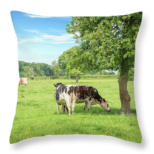 Cows Throw Pillow featuring the photograph Ma Normandie by Delphimages Photo Creations