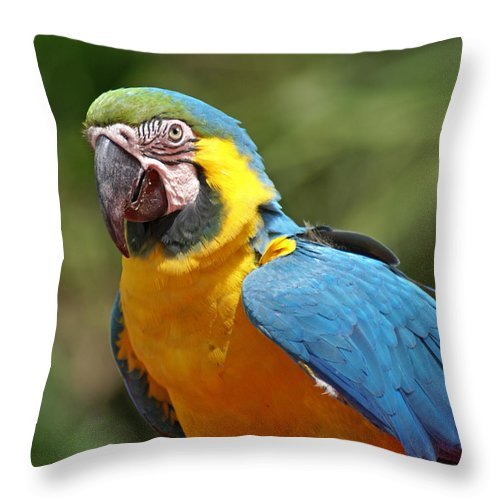 Parrot Throw Pillow featuring the photograph Macaw by Heather Coen