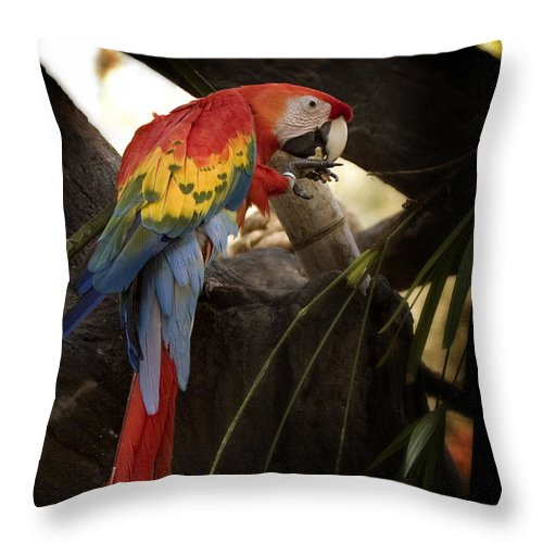 Macaw Throw Pillow featuring the greeting card Macaw Tampa Florida by Joseph G Holland
