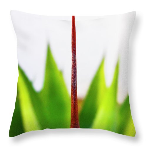 Mack The Knife Throw Pillow featuring the photograph Mack The Knife 3 by Skip Hunt