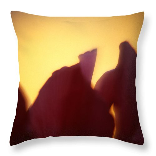 Flower Throw Pillow featuring the photograph Macro Flower by Lee Santa
