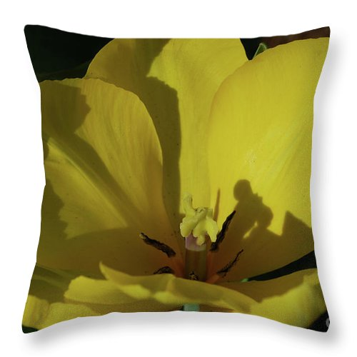 Tulip Throw Pillow featuring the photograph Macro Of A Flowering Yellow Tulip Up Close by DejaVu Designs