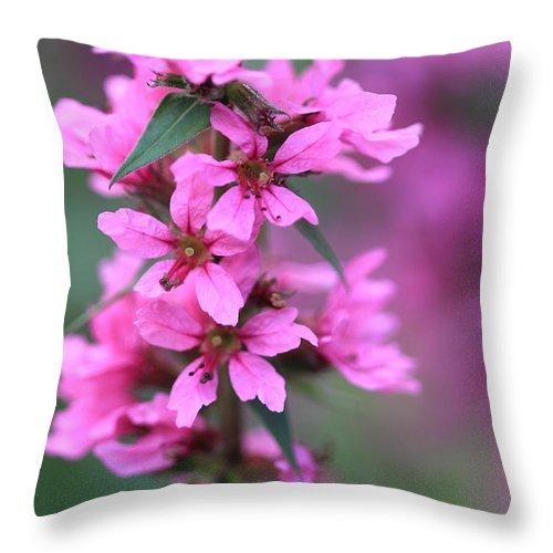 Purple Flower Throw Pillow featuring the photograph Macro Purple Flower by Angela Murdock