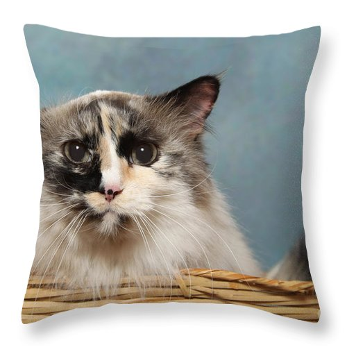 Cat Throw Pillow featuring the digital art Mad Cat by Angel McCoy