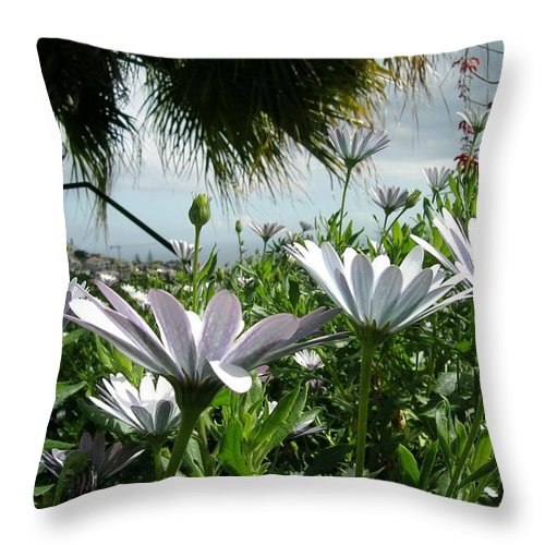 Landscape Throw Pillow featuring the photograph Madeira Daisies by Valerie Ornstein