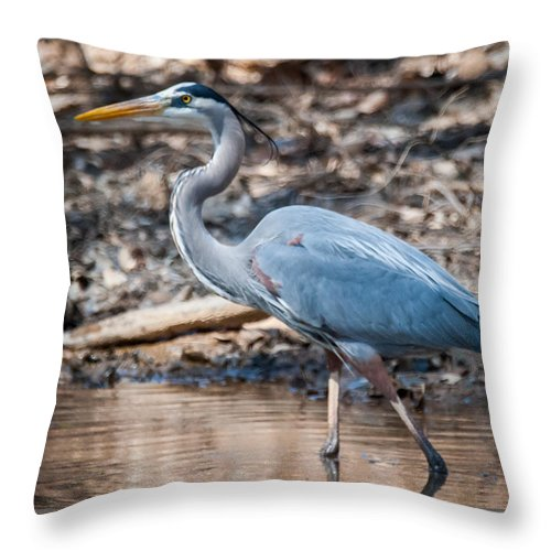 Blue Heron Throw Pillow featuring the photograph Magestic Heron by William Krumpelman