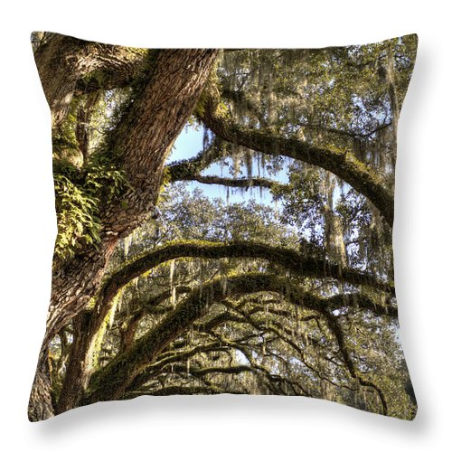 Live Oak Throw Pillow featuring the photograph Magnificant Live Oak Trees Color by Dustin K Ryan