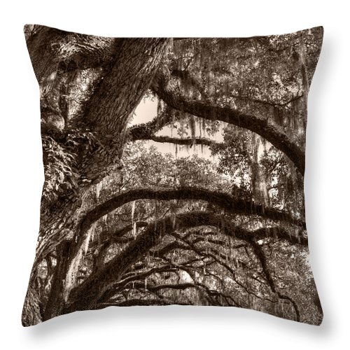 Live Oak Throw Pillow featuring the photograph Magnificant Live Oak Trees by Dustin K Ryan