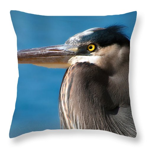Bird Throw Pillow featuring the photograph Magnificent Blue Heron by Rich Leighton