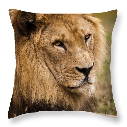Lion Throw Pillow featuring the photograph Magnificent Male Lion by Chad Davis