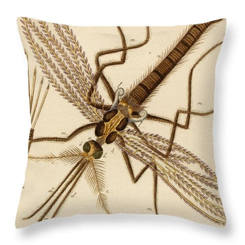Mosquito Throw Pillow featuring the drawing Magnified Mosquito by German School