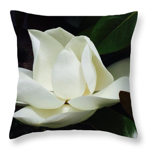 White Throw Pillow featuring the photograph Magnolia by Eric Suchman