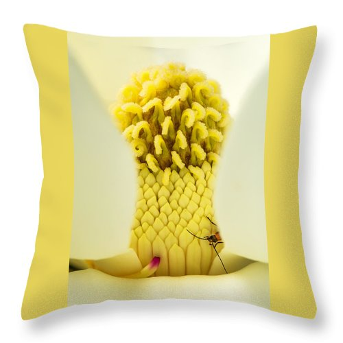 Fine Art Throw Pillow featuring the photograph Magnolia Flower With Company by Darby Donaho