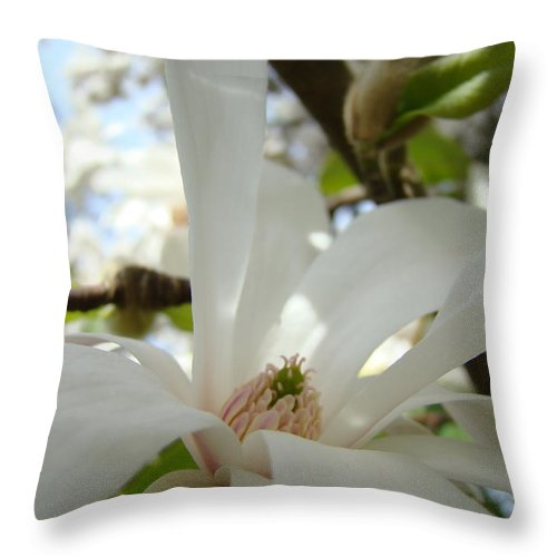 Magnolia Throw Pillow featuring the photograph Magnolia Flowers White Magnolia Tree Flower Art Spring Baslee Troutman by Baslee Troutman