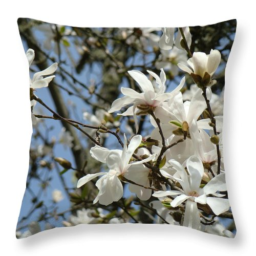 Magnolia Throw Pillow featuring the photograph Magnolia Flowers White Magnolia Tree Flowers Art Prints by Baslee Troutman