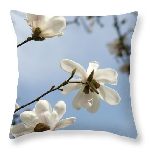 Magnolia Throw Pillow featuring the photograph Magnolia Flowers White Magnolia Tree Spring Flowers Artwork Blue Sky by Baslee Troutman