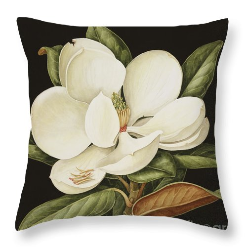 Still-life Throw Pillow featuring the painting Magnolia Grandiflora by Jenny Barron