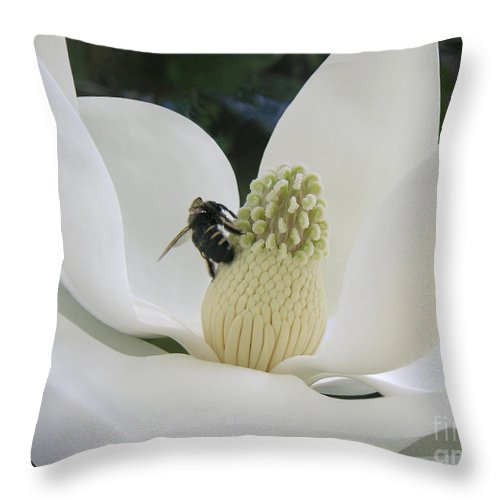 Nature Throw Pillow featuring the photograph Magnolia Honey by Lucyna A M Green