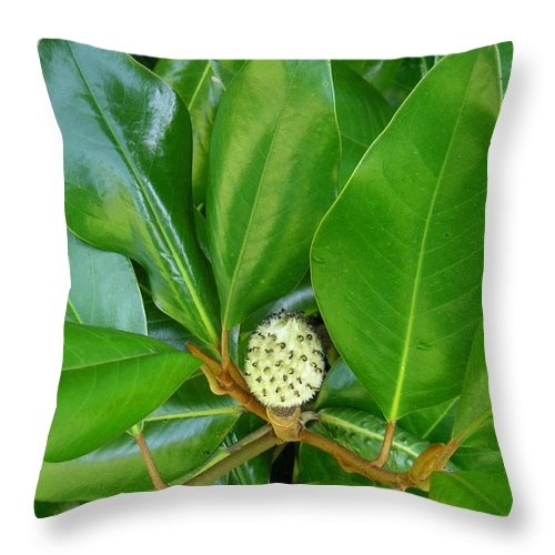 Nature Throw Pillow featuring the photograph Magnolia Pod by Lucyna A M Green