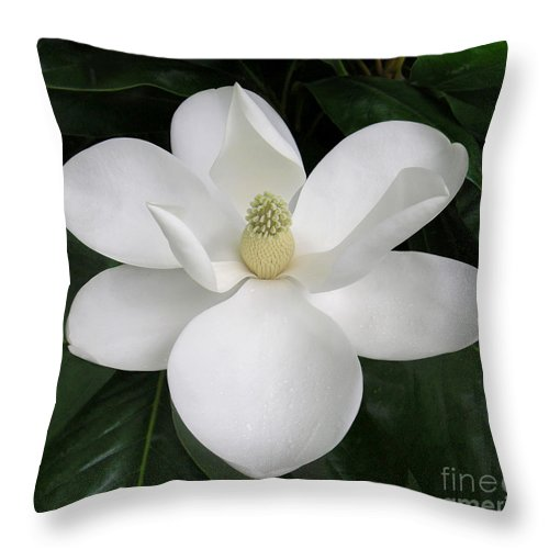 Nature Throw Pillow featuring the photograph Magnolia Splendor by Lucyna A M Green