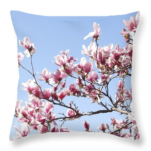 Magnolia Throw Pillow featuring the photograph Magnolia Tree Against Blue Sky by Carol Sweetwood