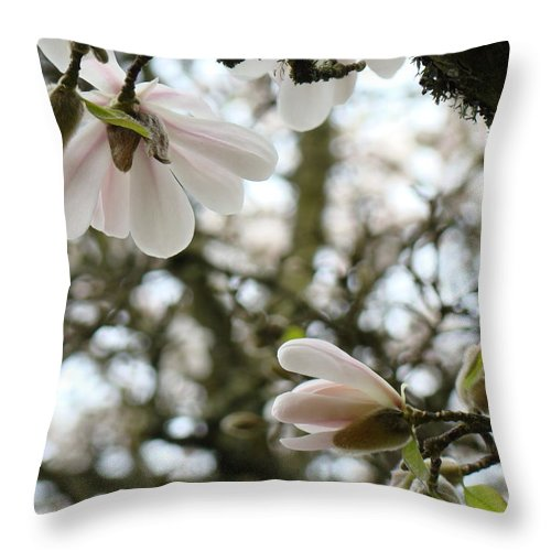 Magnolia Throw Pillow featuring the photograph Magnolia Tree Flowers Pink White Magnolia Flowers Spring Artwork by Baslee Troutman