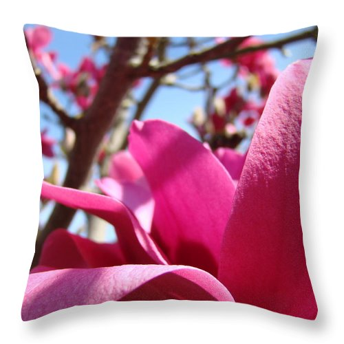 Magnolia Throw Pillow featuring the photograph Magnolia Tree Pink Magnoli Flowers Artwork Spring by Baslee Troutman
