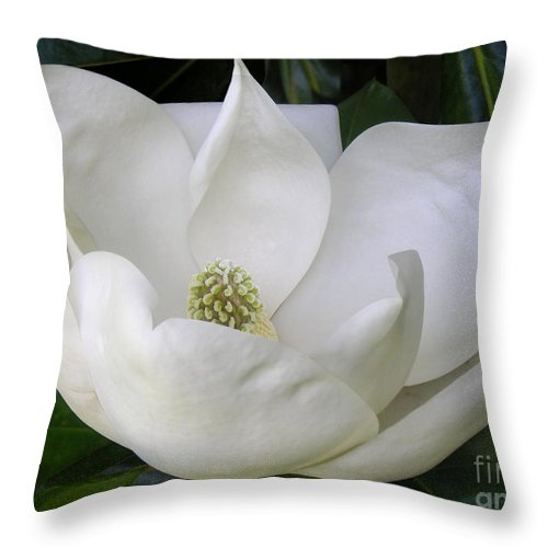 Nature Throw Pillow featuring the photograph Magnolia Unfolding by Lucyna A M Green