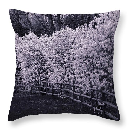 Magnolias Throw Pillow featuring the photograph Magnolias In Llewellyn Park, West Orange, New Jersey by Yuri Lev