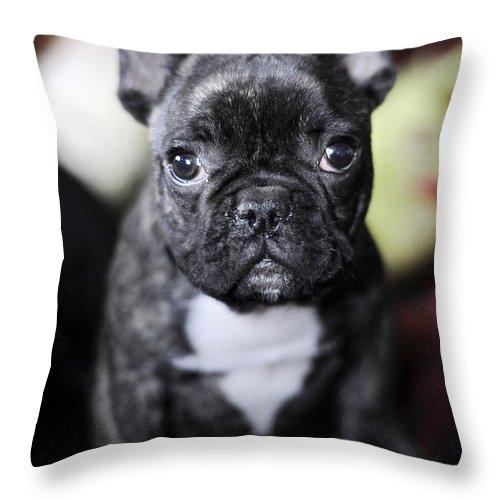 Dog Throw Pillow featuring the photograph Magoo II by Rafa Rivas