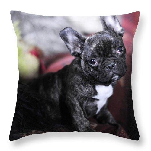 Dog Throw Pillow featuring the photograph Magoo by Rafa Rivas