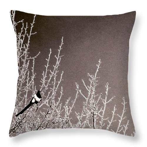 Magpie Throw Pillow featuring the photograph Magpie by Will Borden