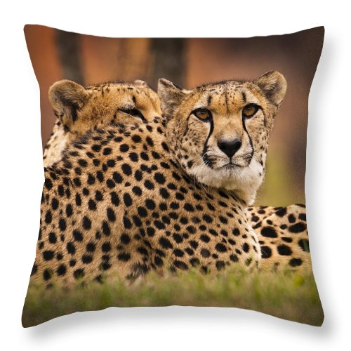 Cheetah Throw Pillow featuring the photograph Majestic by Chad Davis