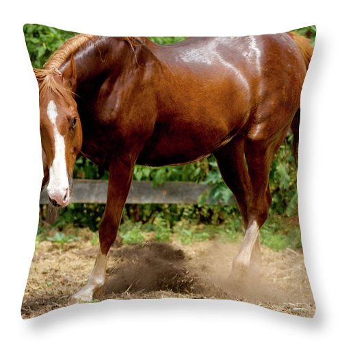 Horse Throw Pillow featuring the photograph Majestic Horse by Julie Niemela