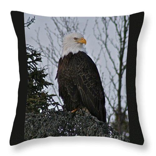 Eagle Throw Pillow featuring the photograph Majestic by Rick Monyahan