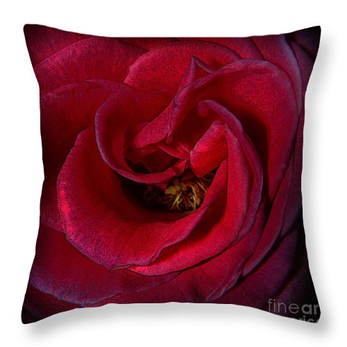 Clay Throw Pillow featuring the photograph Majestic Rose by Clayton Bruster
