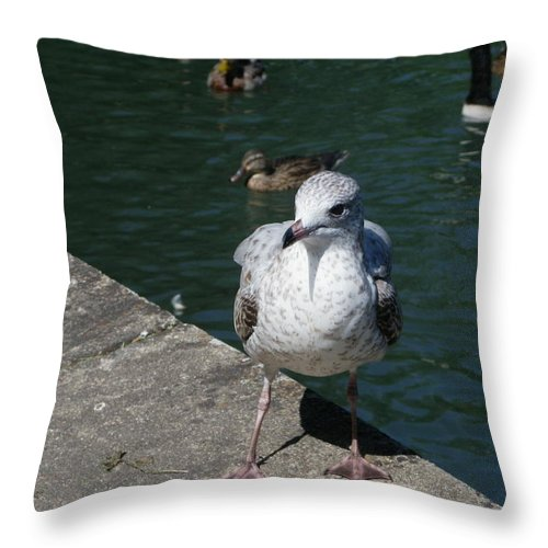 Birds Throw Pillow featuring the photograph Make Sure You Get My Best Side by Peggy King