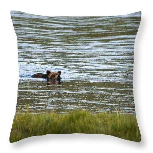 Grizzly Bear Throw Pillow featuring the photograph Make Way by Chad Davis