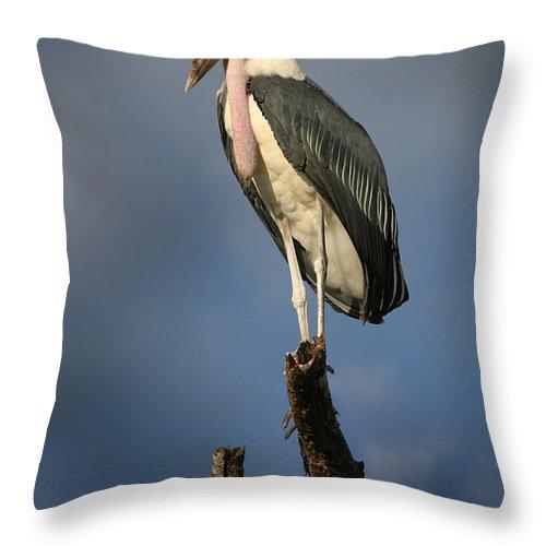 Stork Throw Pillow featuring the photograph Malabu Stork by Joseph G Holland