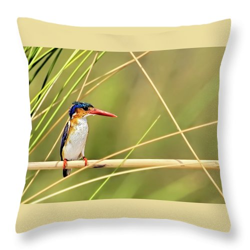Malachite Kingfisher Throw Pillow featuring the photograph Malachite Kingfisher On Watch by Kay Brewer