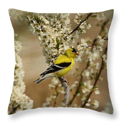 Finch Throw Pillow featuring the photograph Male Finch In Blossoms by Cathy Beharriell