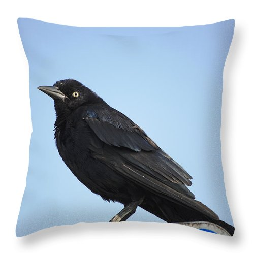 Grackle Throw Pillow featuring the photograph Male Grackle by Kenneth Albin