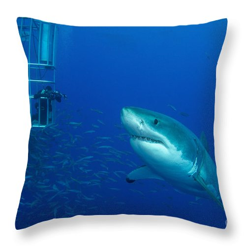 Carcharodon Carcharias Throw Pillow featuring the photograph Male Great White Shark And Divers by Todd Winner
